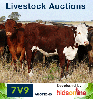 7V9 Livestock Auctions